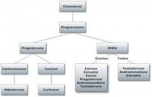 Role of DHEA in female hormone pathway